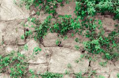 Rock wall with plants on it stock photos