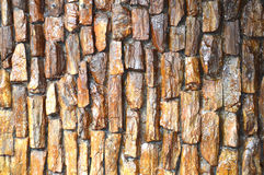 Rock wall Stock Photography