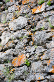 Rock Wall. This was part of a large broken stone wall at Yellowstone National Park. I saw the orange lichens and the green grass growing through the grey stone Royalty Free Stock Photo