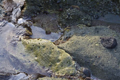 Rock in the water Stock Photography
