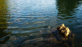 Rock in the water.  royalty free stock photo
