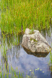 Rock and Water plant in a Lake in an Old Stone quarry in Morro d Stock Image