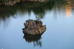 Rock in the water. Rock with vegetation in the river Stock Photography