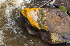 Rock in the water. Yellow growth from thermal activity on a rock in the water at yellowstone national park in wyoming stock images