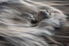 Rock and wave. A long exposure in the beach.Rock and wave Stock Images