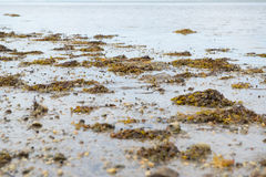 Rock Weed On The Shore Sunny Day Ocean View Royalty Free Stock Photo