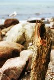 Rock, Wood, Shore, Driftwood Stock Photography