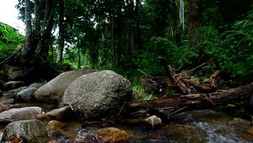 Rock and wood in stream. Many big rocks and stem of fallen tree in the tropical stream stock video
