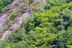 Rock in the woods. A steep rock among the trees royalty free stock photos