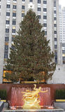 Rockefeller Center Christmas Tree and statue of Prometheus at the Lower Plaza of Rockefeller Center in Midtown Manhattan Stock Photo