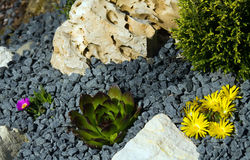 Rockery Royalty Free Stock Photos