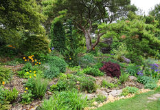 Rockery area in an English garden Stock Images