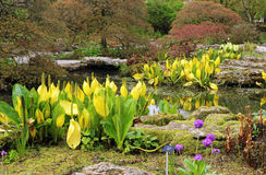 Rockery area in an English garden Royalty Free Stock Images