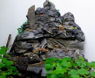 Rockery garden stone Stock Images