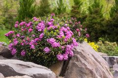 Rockery in the garden with variety of different flowers and plants stock photo