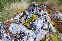 Rockery Royalty Free Stock Photography