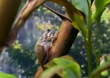 Rocket Frog Royaltyfri Foto