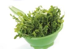Rocket salad in plastic bowl Royalty Free Stock Image