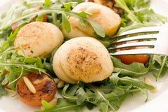 Rocket Salad with Scallops Stock Photos