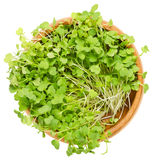 Rocket salad sprouts, arugula, in wooden bowl over white Stock Photography