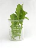 Rocket Science. Rocket lettuce leaves in scientific flask Stock Photos