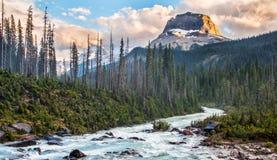 Rockey Spitze Yoho im Nationalpark Lizenzfreie Stockbilder