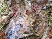 Rockface. A close up shot of the surface of a rock face. Showing texture, details and colours Stock Photography