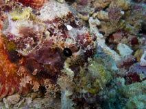 Rockfish1 illustrazione vettoriale