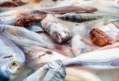 Rockfish Stock Photos