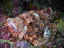 Rockfish Stock Image