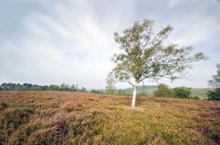 Rockford Common. In the New Forest National Park Stock Photos