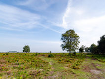 Rockford Path 2. A pathway on Rockford Common, New Forest National Park Stock Image