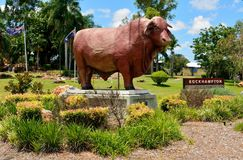Statue of Santa Gertrudis bull in Rockhampton, Queensland. stock photo