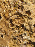 rockhavstextur arkivbilder