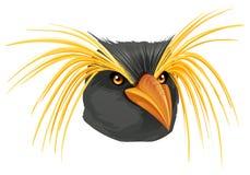 Free Rockhopper Penguin Stock Images - 35501834