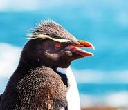 Rockhopper Stock Photos