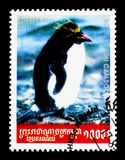 Rockhopper Penguin Eudyptes chrysocome, serie, circa 2001. MOSCOW, RUSSIA - NOVEMBER 24, 2017: A stamp printed in Cambodia shows Rockhopper Penguin Eudyptes Stock Images