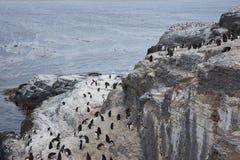 Rockhopper Penguins Royalty Free Stock Photos