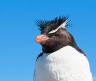 Rockhopper Pinguin Stockfotografie