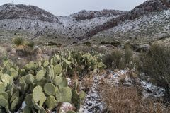 Rockhound park, New Mexico, winter view. A brief winter storm changes the views at Rockhound state park in southwest New Mexico stock photos