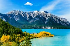 The Rockies of Canada. The emerald water of Abraham lake is surrounded by evergreen coniferous forests. Concept of active, stock image