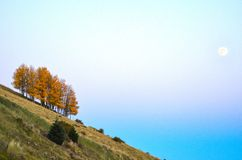 Autumn color aspen Grove on slant hill stock image