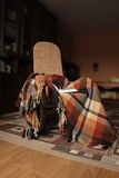 Rocking-chair with plaid and book Stock Images