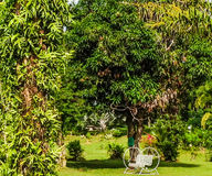 Rocking chair in tropical garden Stock Images