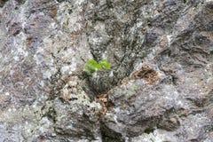 Rockowa ściana jako tło Zdjęcie Royalty Free