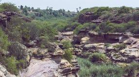 Rockowa pustynia po deszczu z zielonym krzakiem Obraz Stock