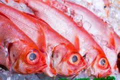 Rockowa rybia sprzedaż Zdjęcia Stock