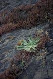 Rockowa struktura & rośliny zdjęcia stock