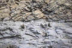 Rockowa twarzy tekstura z rośliny tłem zdjęcia stock