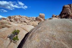 Rockowe formacje w Joshua Drzewa Park Narodowy zdjęcie stock